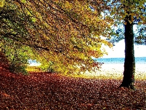 autumn, viewes, Coast, trees
