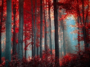 Fog, autumn, forest