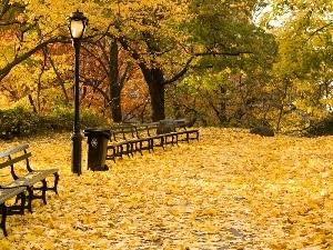 Park, Leaf, autumn, bench