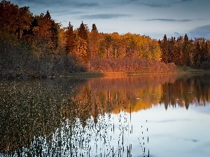 woods, autumn, lake