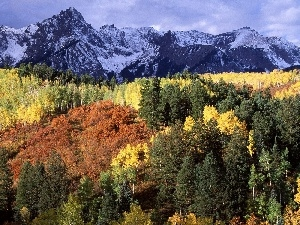 woods, autumn, Mountains
