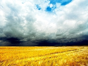field, cereals, clouds