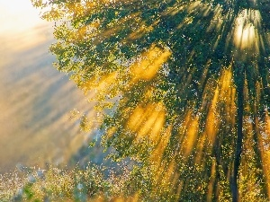 The clear, rays of the Sun, trees
