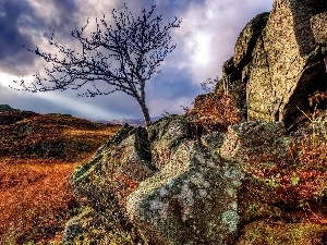 clouds, ledge, rocks, autumn, trees, Stones