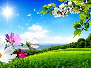 sun, Meadow, color, Flowers, summer, rays