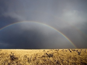 Dried, wilderness, Great Rainbows