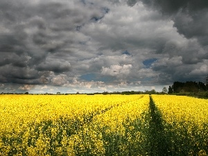 clouds, Yellow, Flowers, Meadow