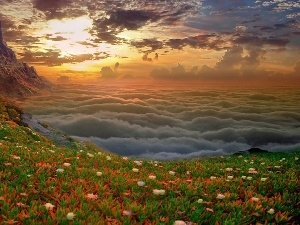 Flowers, color, rocks, clouds