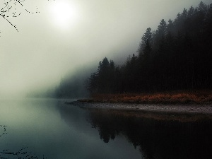 forest, Fog, River