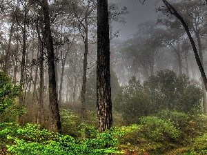 forest, Fog