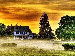 Fog, trees, viewes, west, house, sun