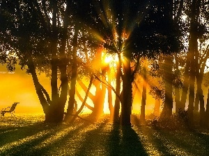 Bench, forest, Sunrise, rays
