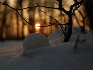 reflection, snow, forest, sun