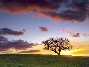 trees, clouds, Great Sunsets, Meadow