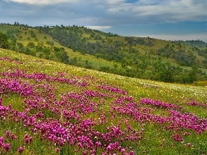 Meadow, trees, viewes, mountains, Flowers, slope