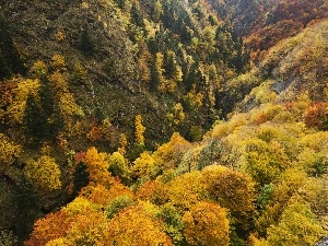 forested, Mountains, autumn