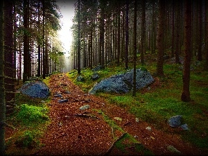Path, viewes, forest, Stones, trees