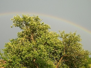 Great Rainbows, trees