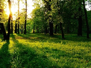 rays, trees, viewes, nature, sun, forest