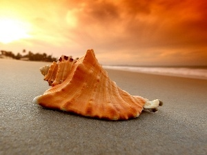 shell, Beaches, west, sun