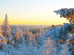 snow, trees, viewes, west, winter, sun
