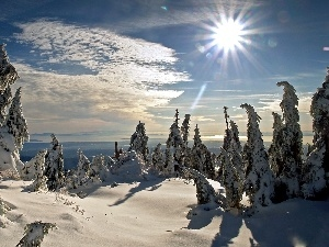sun, winter, snow