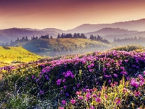 Sunrise, Mountains, Meadow, Flowers