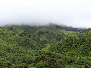 The Hills, Fog, green ones