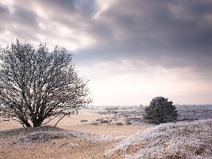 trees, White frost, field