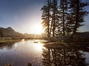 trees, lake, rays, viewes, sun