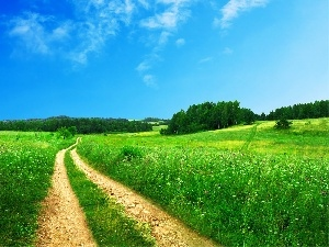trees, Path, Sky, viewes, Meadow