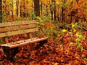 viewes, trees, Bench, Leaf