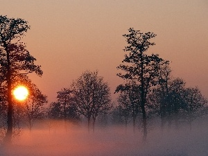 viewes, trees, west, Fog, sun