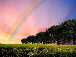 Meadow, trees, viewes, Great Rainbows