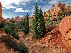 trees, viewes, canyon