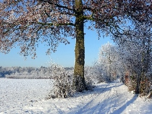 viewes, trees, field, winter, Way