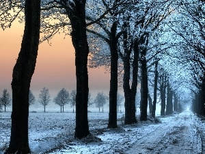 viewes, trees, winter, Way