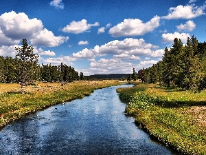 White, clouds, forest, Meadow, River