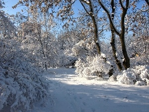 winter, viewes, forest, trees