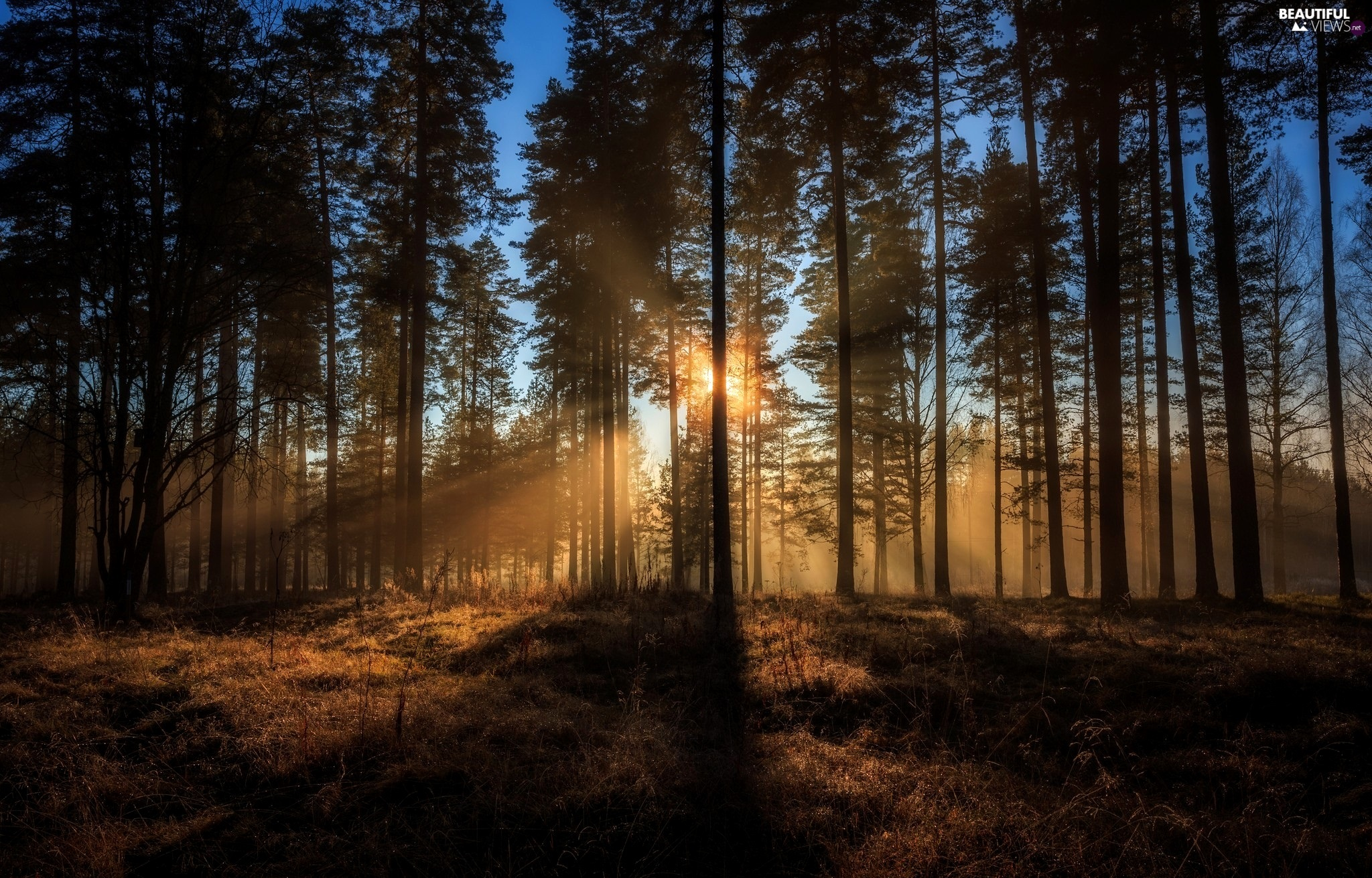 light breaking through sky, forest, trees, viewes