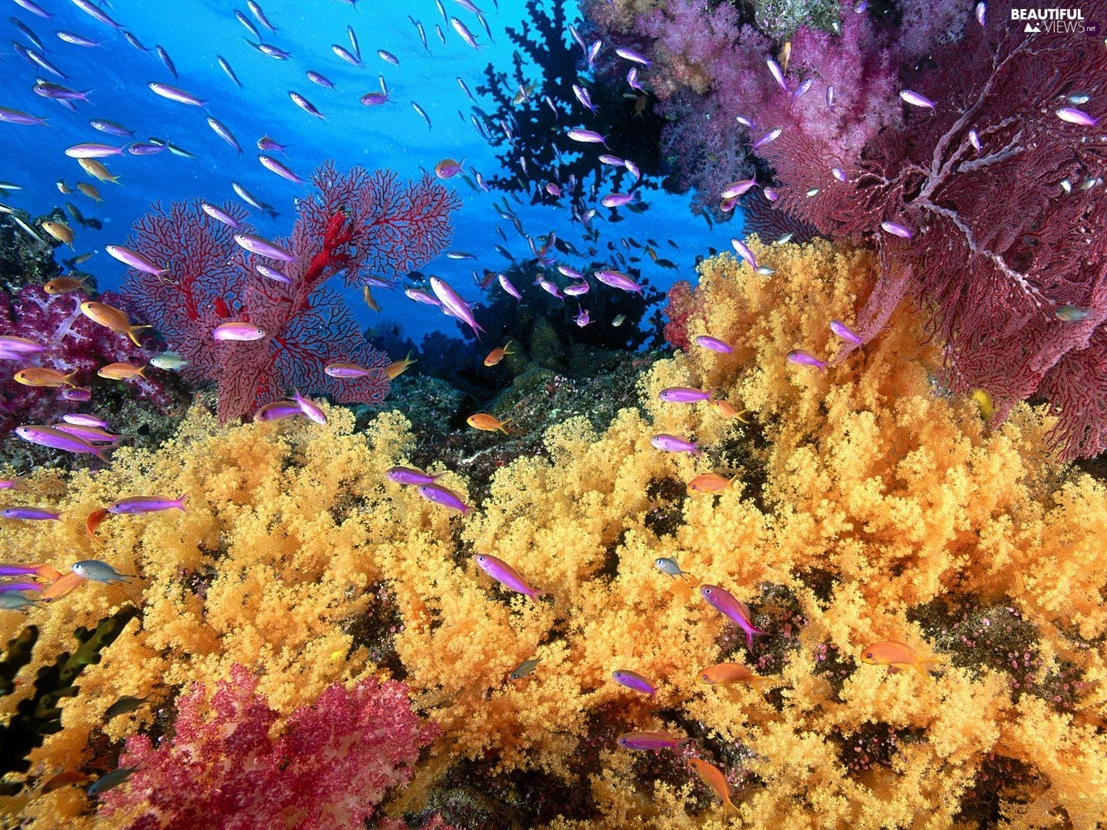 coral, underwater, reef - Beautiful views wallpapers ...