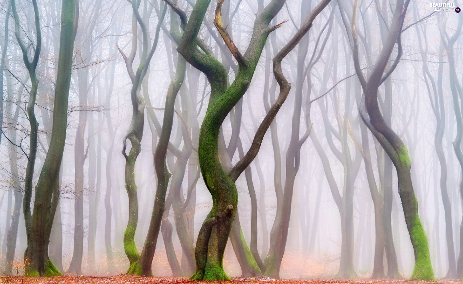 trees, forest, Fog, autumn, viewes, bent