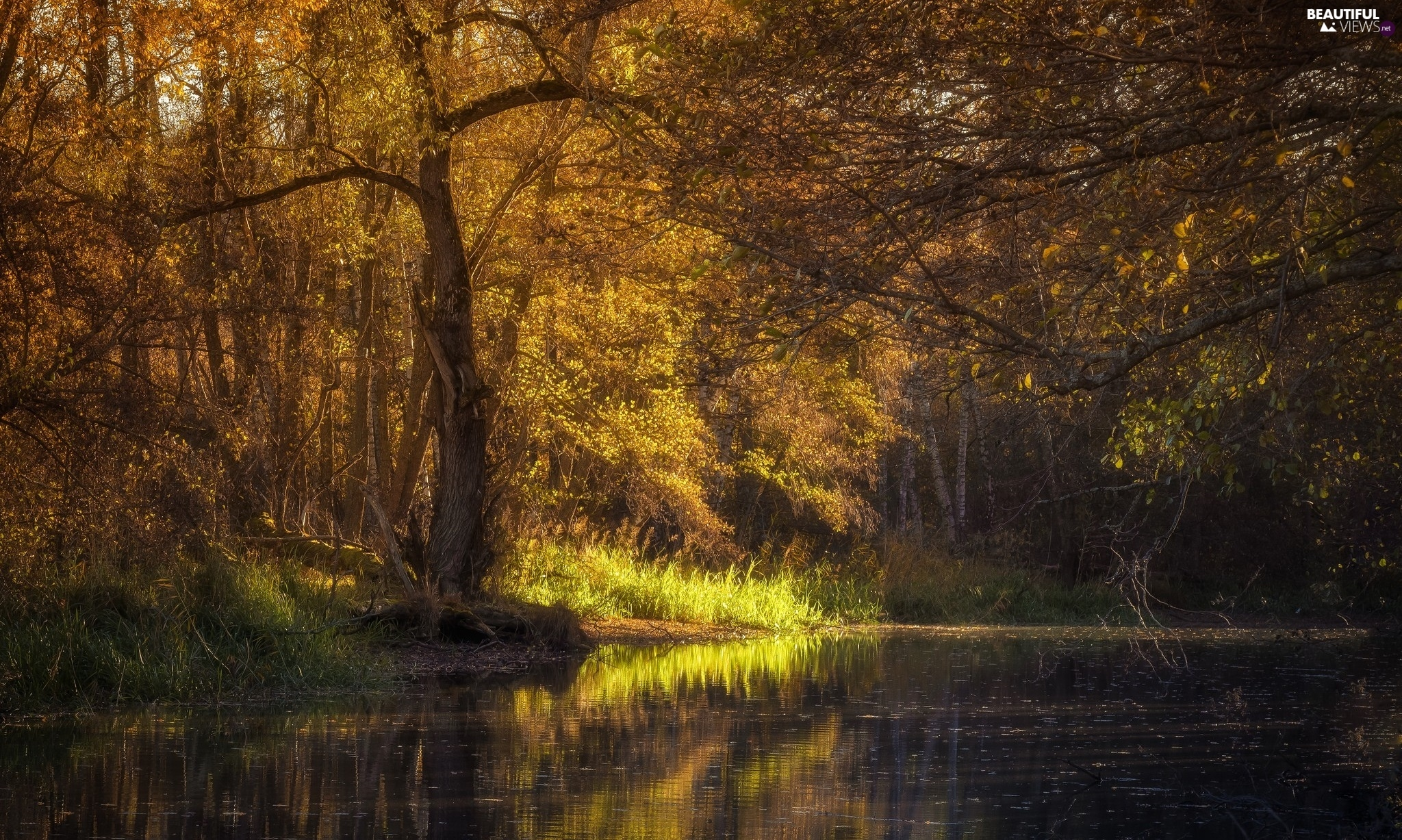 forest, viewes, autumn, River, trees