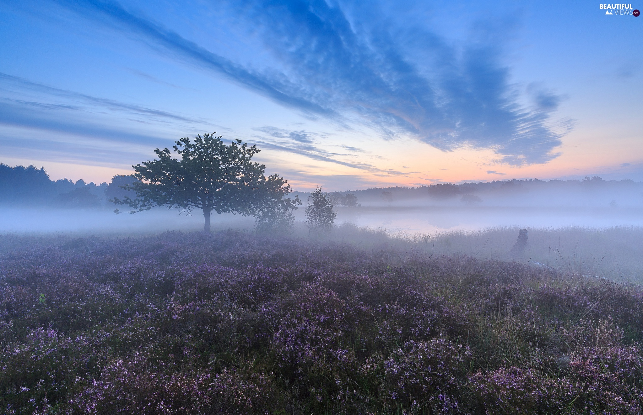 viewes, heather, heath, autumn, trees, Fog, Field