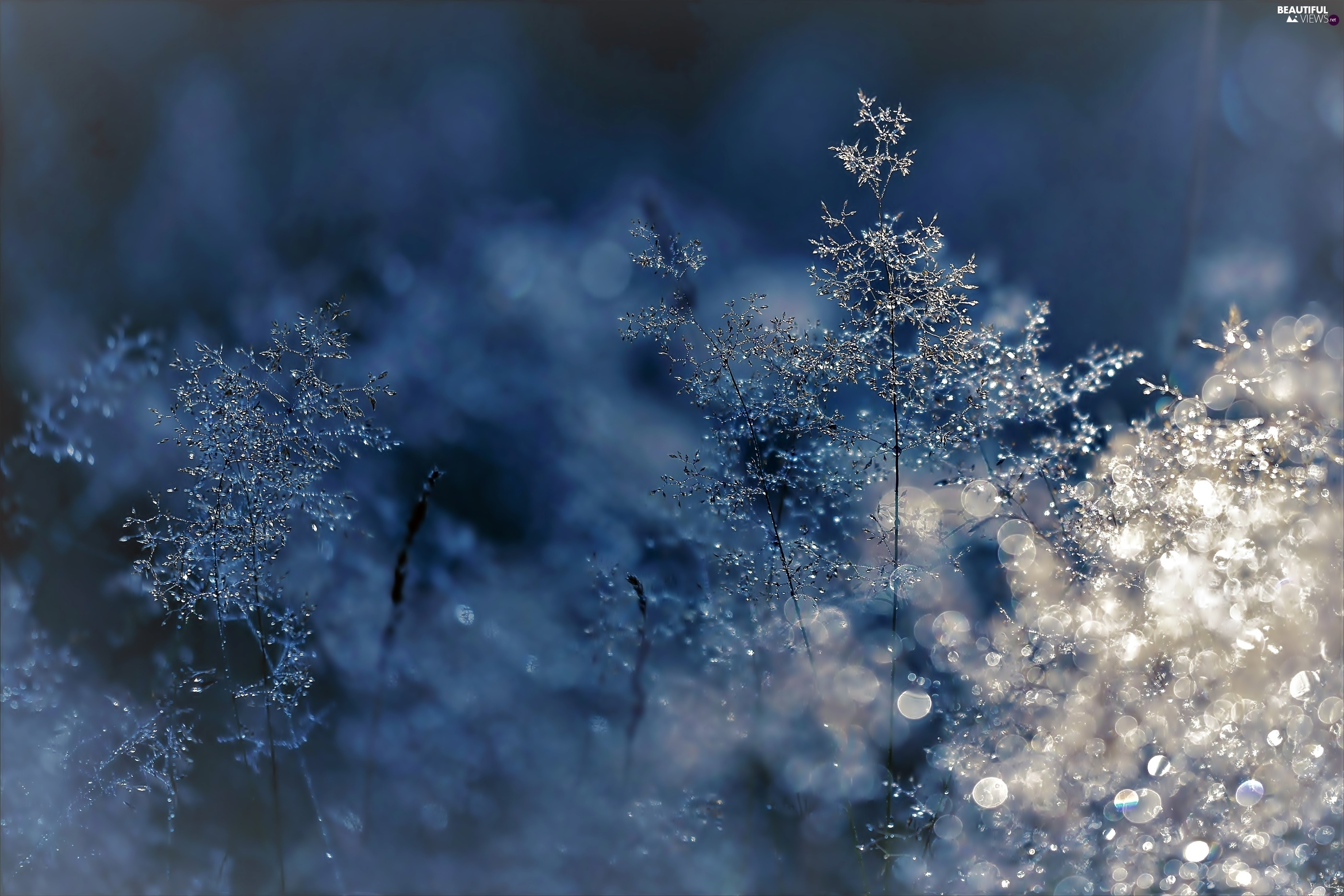 grass, ligh, Bokeh, sun, luminosity, frozen, winter, flash