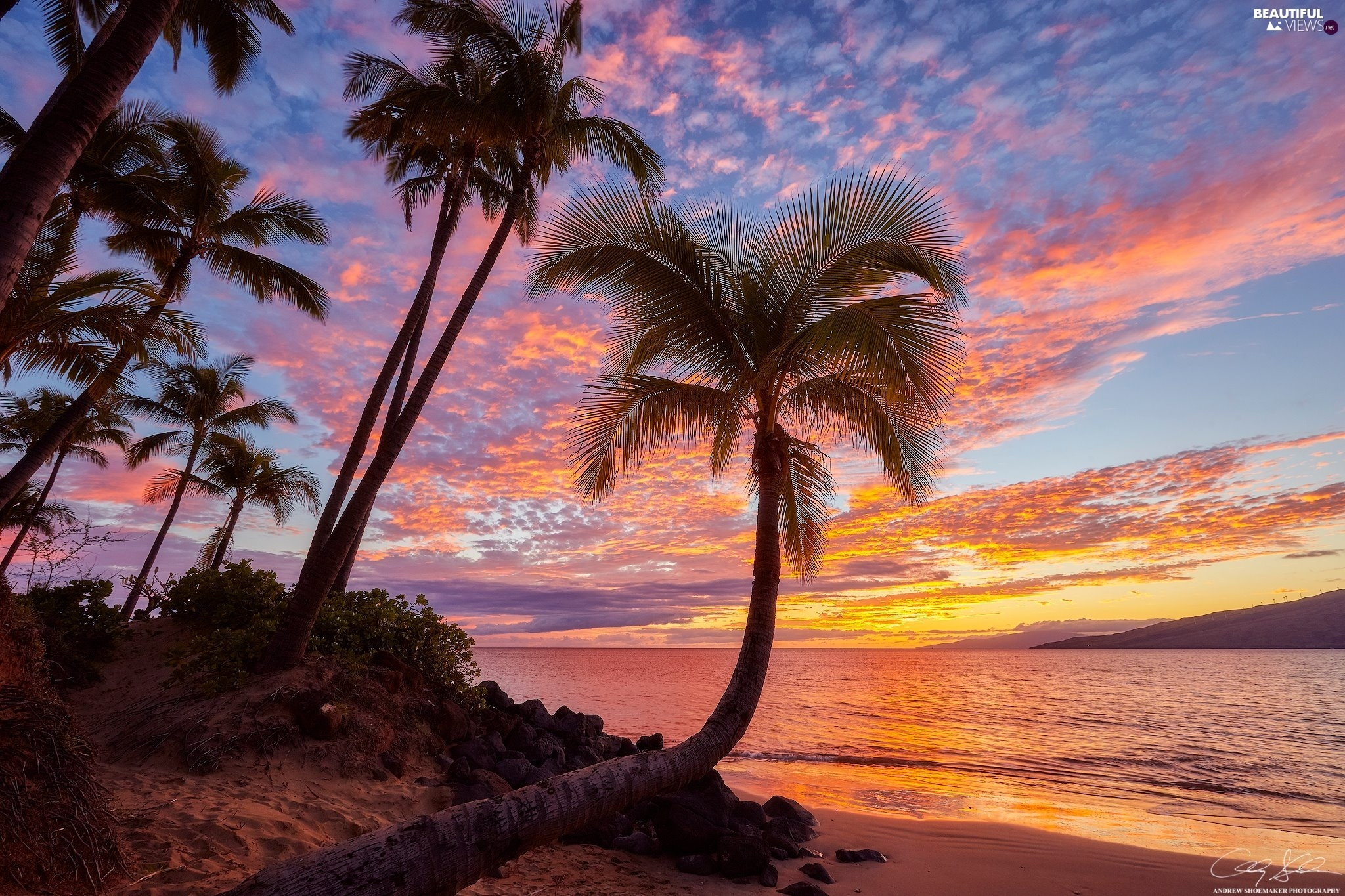 sea, Palms, Aloha State Hawaje, Great Sunsets