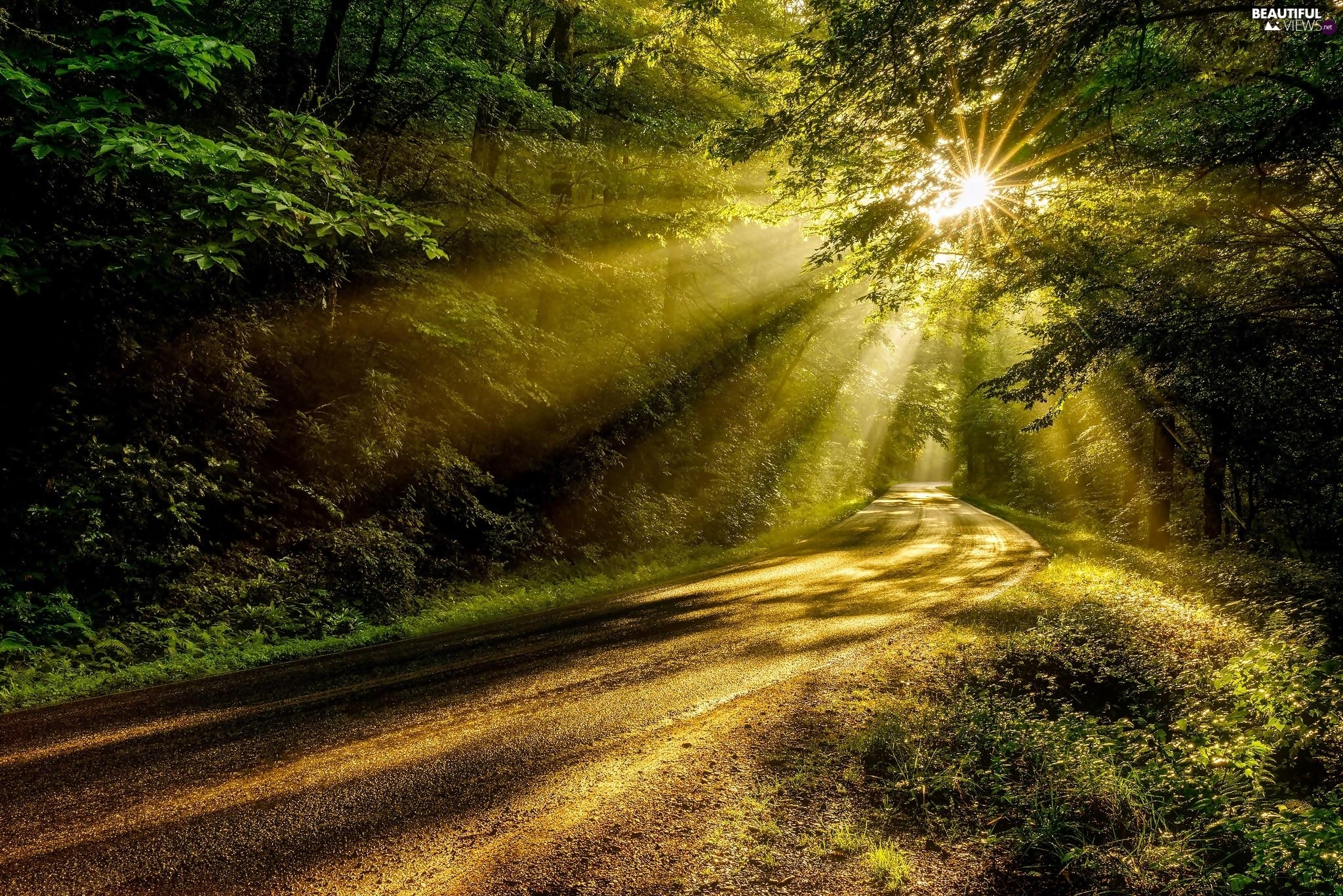 summer, rays of the Sun, forest, Way
