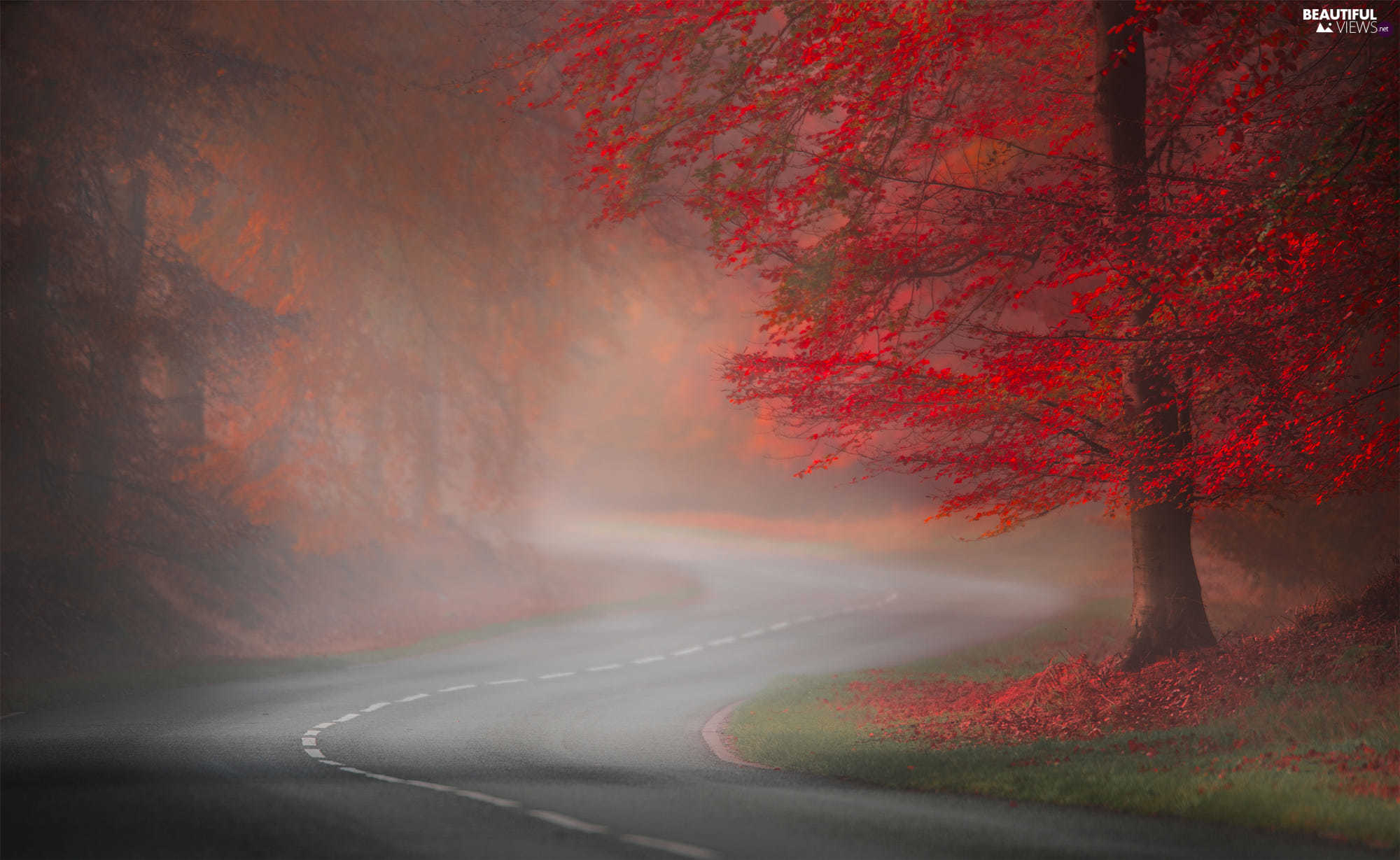 Fog, Red, viewes, autumn, Leaf, Way, trees