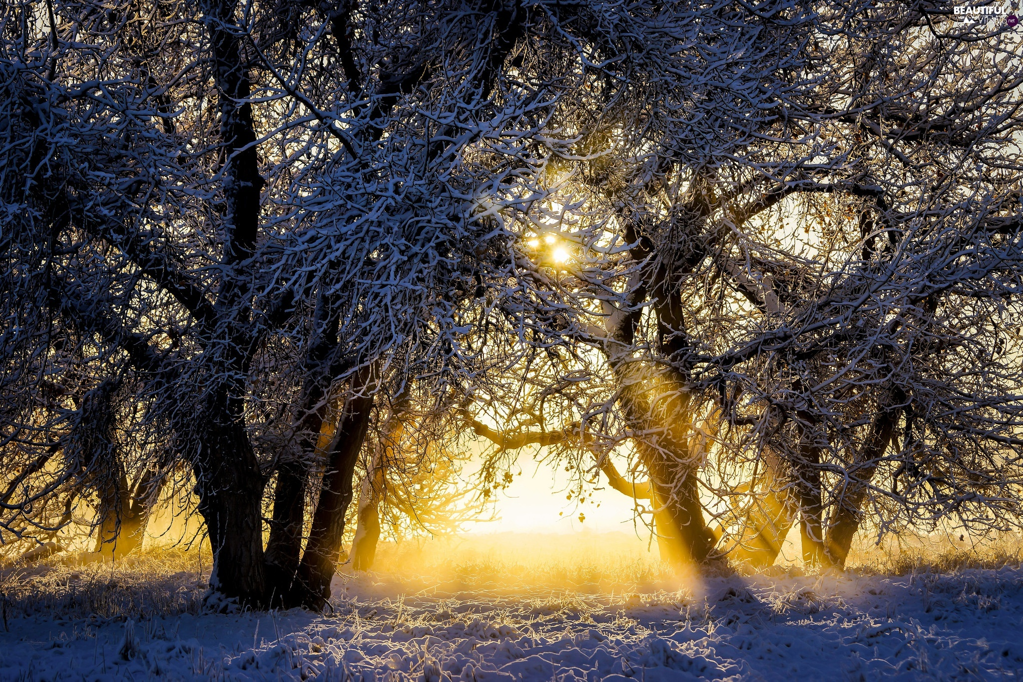 trees, viewes, light breaking through sky, Snowy, winter