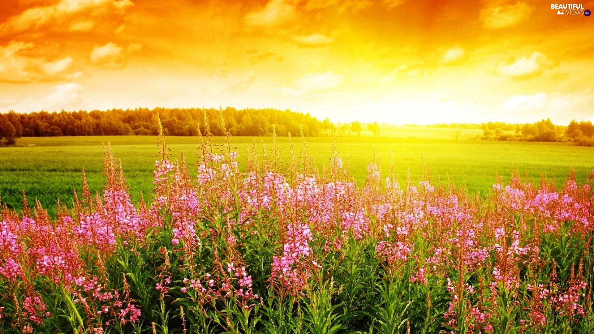 Meadow At Sunrise HD desktop wallpaper : Widescreen : High ...
